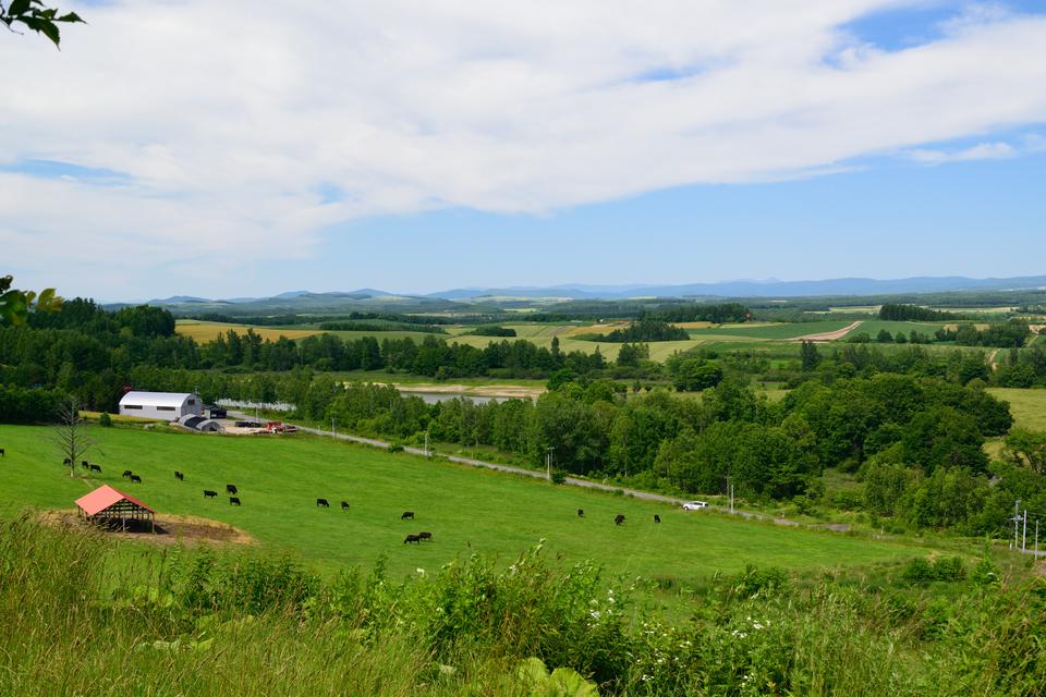 丘の景色と羊蹄山(2015夏)part1!夏らしい景色と白金温泉