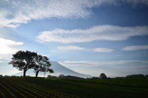 羊蹄山と双子の木 ニセコ