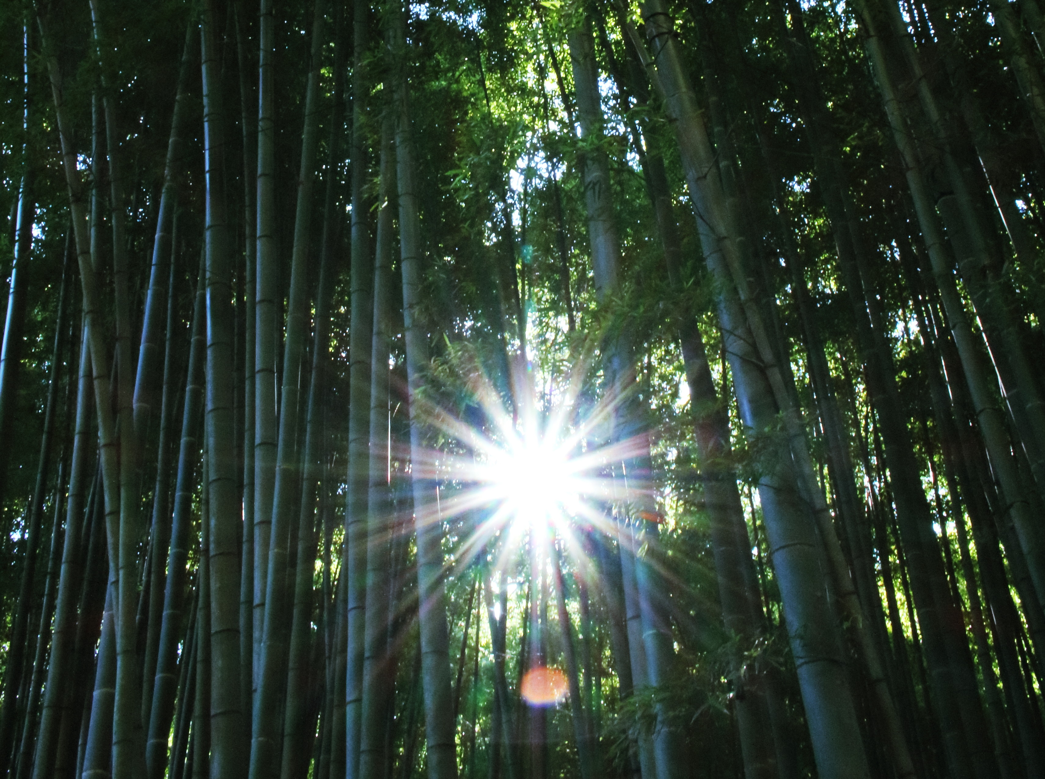初めての秋の鎌倉。デジイチを持って鶴岡八幡宮や竹寺を巡る