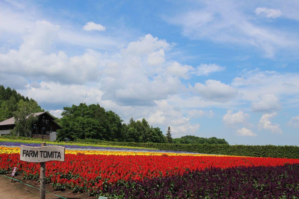 焦るんじゃない、おれは北海道に行きたいだけなんだ-北海道旅行を計画する-