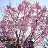 もうすぐ春が来る、写真シーズンの開幕!日中シンクロを試してみた