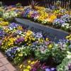 チューリップが満開!ポカポカ陽気の土曜日!満開の花々を求めて昭和記念公園へ