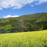 ハート形の湖で菜の花と戯れる-北竜湖に行ってきた-