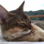 原宿前の高級感あふれる猫カフェ「MoCHA(モカ)」へ行ってみた