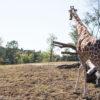 よこはま動物園ズーラシアに行って来た!望遠レンズが欲しくなる・・・
